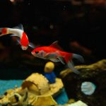 fish-235777_960_720