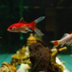 fish-235783_960_720