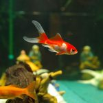 fish-235784_960_720